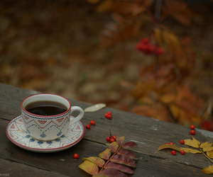 autumn, cups, and gall image