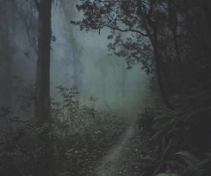 fog, tree, and foggy image
