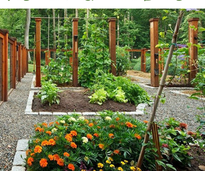vertical garden, veggie garden, and small containers image