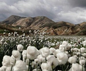 cotton, nature, and mountains image