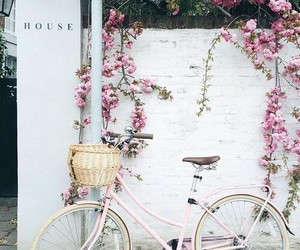 bicycle, wall, and flower image