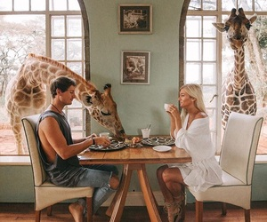couple, giraffe, and breakfast image