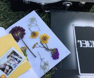 flowers, polaroid, and record image