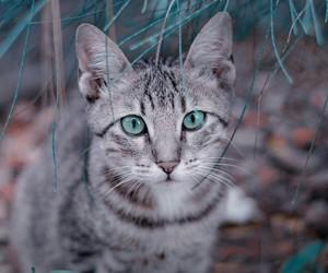 animal, felines, and pets image