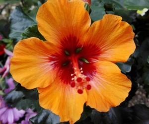 beauty, beautyfull, and blossom image