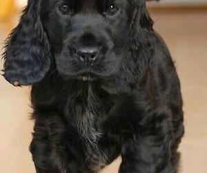 animal, black dog, and dog image