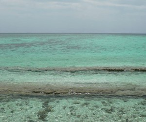 mint, mint green, and reef image