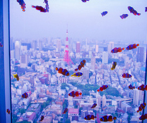 fish, blue, and city image