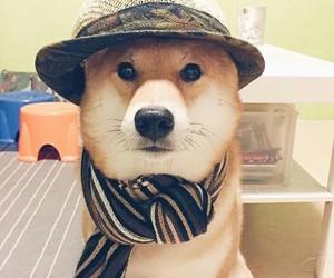 dog, hipster, and inu shiba image