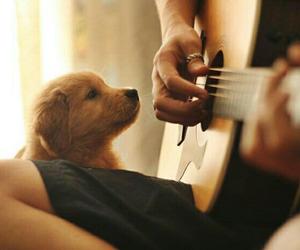 animal, dog, and guitar image