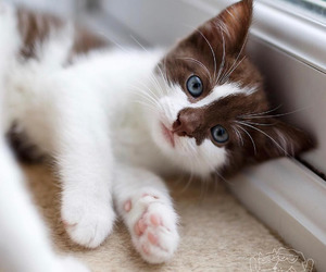 adorable, cats, and kitties image