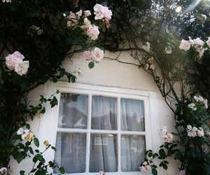 flowers, window, and rose image