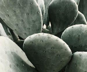 arizona, filter, and cactus image