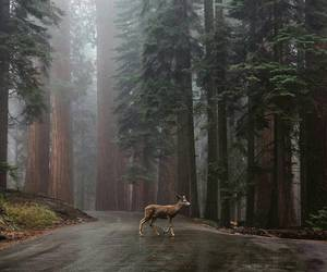 deer, forest, and thedreamlocation image