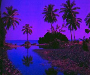 palm trees, beach, and palms image