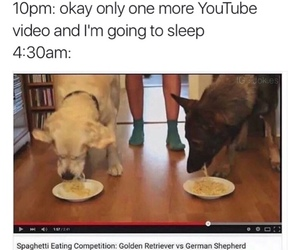 funny, dog, and meme image
