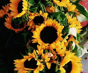 flowers, sunflower, and happiness image