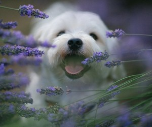 puppy, dog, and nature image