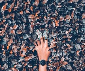 amazing, pretty, and autumn image