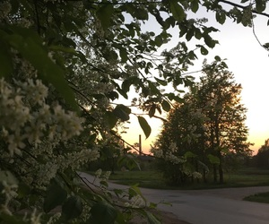 evening, spring, and trees image