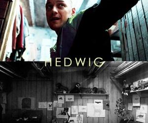 hedwig, james mcavoy, and split image