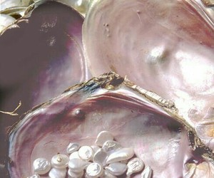pearls, shell, and pink image