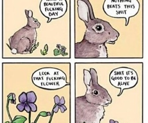 comic, funny, and rabbit image