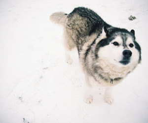 dog, snow, and animal image