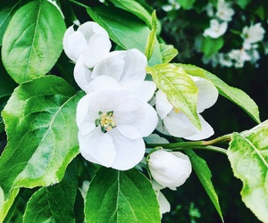 beauty, flowers, and white flowers image