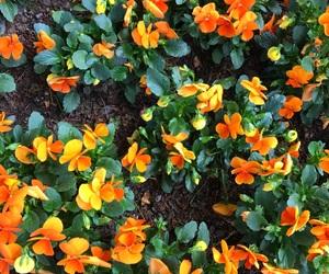 feed, inspo, and orange image