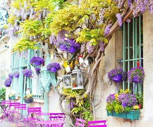 cafe, flowers, and france image