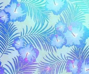 aqua, blue, and hibiscus image