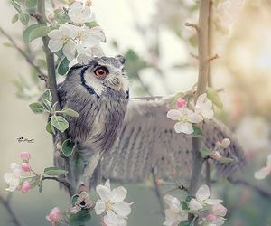 cherry blossom, nature, and owl image