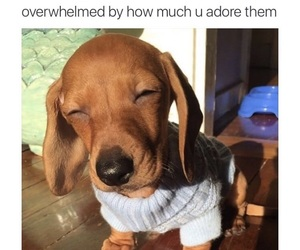 adorable, puppy, and animal image