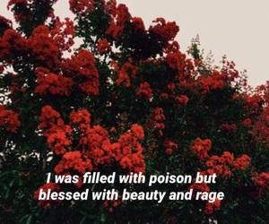 beauty, flowers, and Lyrics image