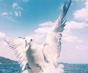 beautiful, bird, and teraoka natsumi image