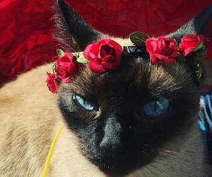 blue, cat, and red image