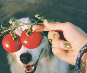 dog, tomato, and funny image