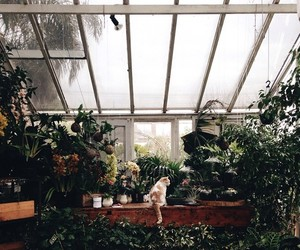 plants, cat, and greenhouse image