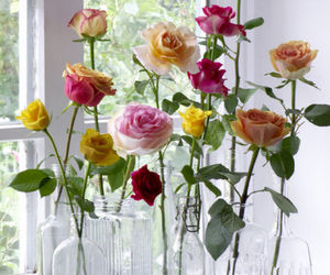 beautiful, roses, and colorful image