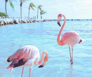 beach, Caribbean, and flamingos image