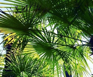 boys, Easy, and palms image