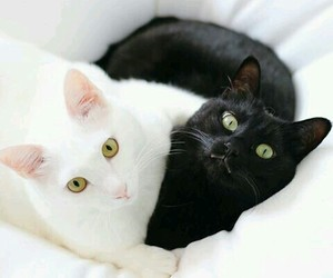 black and white, black&white, and cats image