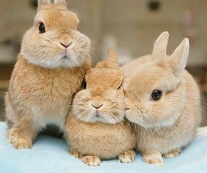 animals and bunny image