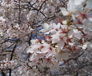 blossoms, nature, and flowers image