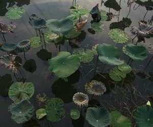 aesthetic, green, and pond image