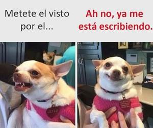 funny, mood, and dog image