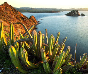 cactus and mexico image