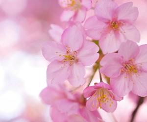 desktop wallpaper and flower desktop image