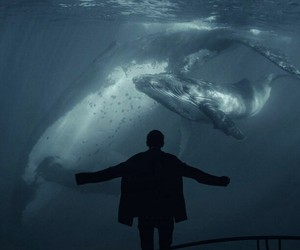 whale and ocean image